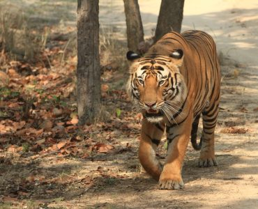 WILDLIFE SAFARIS IN BARDIA NATIONAL PARK