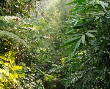 SINHARAJA RAINFOREST WALK