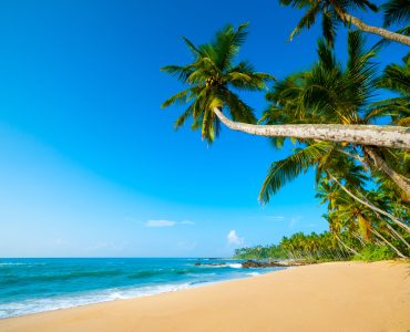 Explore the South Coast of Sri Lanka